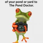 The Pond Doctor