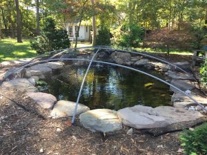 Fall pond maintenance and netting